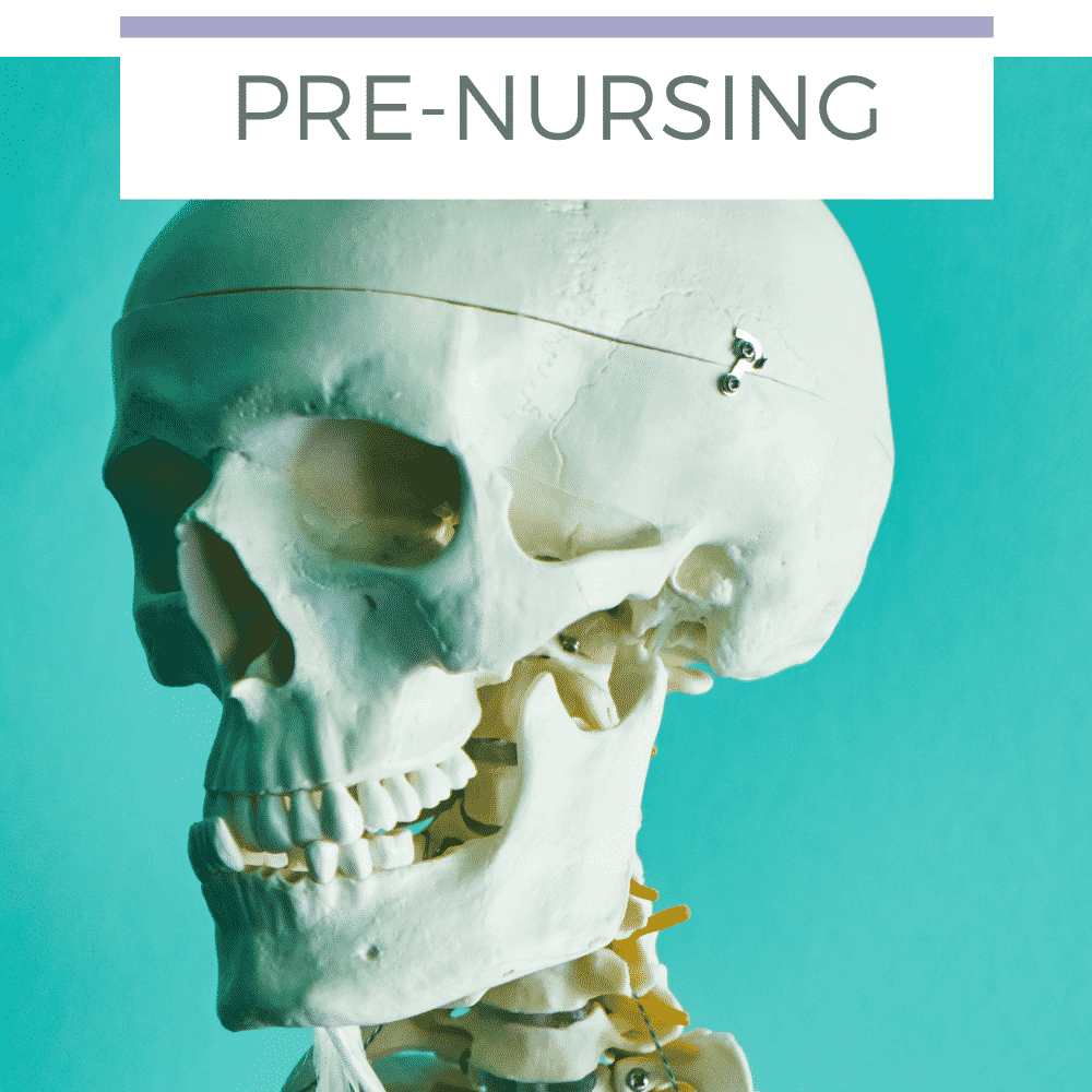 Bone ossification - Pre-nursing student